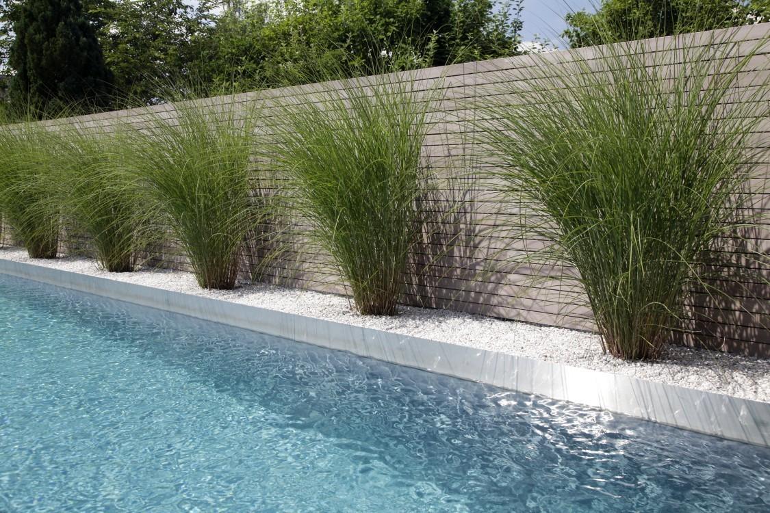 Biotop Schmaler Living Pool Im Paradies