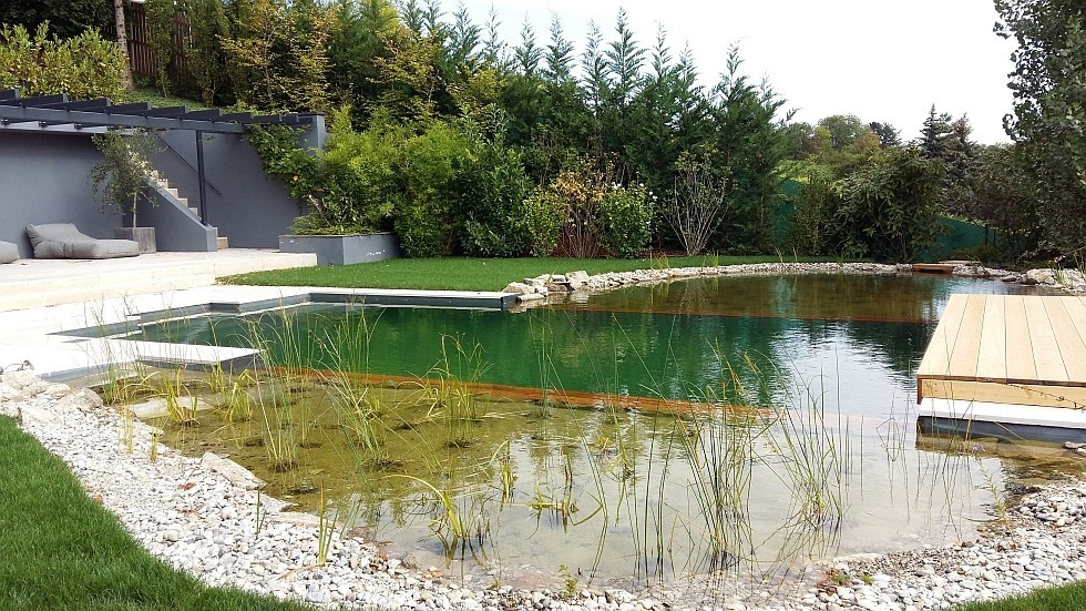 Biotop Umbau Eines Swimmingpools Zu Einem Swimming Pond